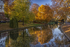 golden autumn (Wim van de Meerendonk, loving nature) Tags: utrecht singel mailiesingel autumn trees reflection outdoors outdoor orange goldenhour bright color colors colours colour canal canals netherlands nederland park provincieutrecht sony scenic tree thenetherlands wimvandem water golddragon astoundingimage