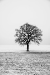 The Lonely Tree (lja_photo) Tags: wintertime winter snow cold outdoors tree lonely contrast dramatic exploration natural light nature naturephotography naturepics black white blackandwhite bw bnw blackandwhitephoto monochrome monotone monoart moody mist morning mood misty fields landscape landscapes luxembourg minimalistic minimal minimalism hiking travel landmark europe exposure early textures haze frozen horizon photography art abstract sky fineart fujixt20 fog