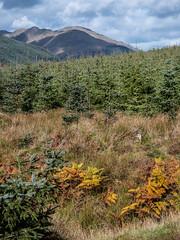Growth - Glenkin Oct 2018 (GOR44Photographic@Gmail.com) Tags: glenkin trees cloud autumn hills mountains scotland argyll cowal bracken gor44 green shadows sunlight panasonic g9 45200mmf456 pine