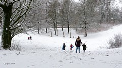 Sneeuwpret op vrijdagmorgen, 's-middags weer weggedooid. Fun in the snow. Only in the morning in the afternoon it was allmost gone again. (Cajaflez) Tags: sleeen sneeuwpret slee bomen sneeuw dragonderpark veenendaal o c