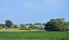 Kentish Landscape. (pstone646) Tags: landscape nature fields meadows trees blossom bluesky hills kent view clouds crops green grass