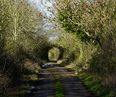 Follow the Season (JamieHaugh) Tags: clevedon somerset england uk gb britain outdoors nature sony a7rii ilce7rm2 zeiss alpha landscape path arch track green trees winter day sunshine shadows bushes route peaceful serene quiet way