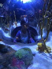 "2018-03-24-to-30-minnesotta-to-see-adam-and-sara-curl-with-at-aquarium-3_44228223934_o • <a style=""font-size:0.8em;"" href=""http://www.flickr.com/photos/109120354@N07/46168011892/"" target=""_blank"">View on Flickr</a>"