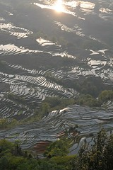Yuanyang Terraces, Bada area, counterlight (blauepics) Tags: china yunnan province provinz yuanyang landscape landschaft nature natur scenery rice terraces reisterrassen terrassen mountains berge water wasser unesco world heritage site weltkulturerbe farming agriculture landwirtschaft farmers bauern minorities minderheiten bada view aussicht panorama counterlight light licht gegenlicht reflections reflektionen spiegelungen