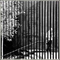 Lines & Beyond #13 (Napafloma-Photographe) Tags: 2018 architecturebatimentsmonuments artetculture aveyron bandw bw fr france kodak kodaktrix400 personnes rodez techniquephoto blackandwhite boutique monochrome napaflomaphotographe noiretblanc noiretblancfrance pellicules photoderue photographe photographie province streetphoto streetphotography muséesoulages musée pierresoulages