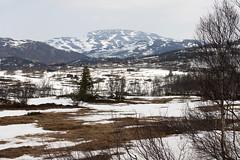 Rauland 1.9, Telemark, Norway (Knut-Arve Simonsen) Tags: rauland telemark norge норвегия norway noruega norwegen norvegia norvège नॉर्वे 挪威 ノルウェー நோர்வே νορβηγία sydnorge sørnorge østlandet norden scandinavia скандинавия