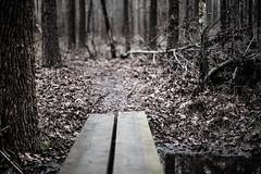 Crossing into the woods (jfl1066) Tags: southbrunswicknj middlesexcounty winter nj davidsonsmill centralnj njoutdoors newjersey jan19
