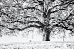 Before the Earth begins to shake... (Ody on the mount) Tags: abstrakt bäume doppelbelichtung em5 kunst landschaft licht mzuiko6028 omd olympus pflanzen schwäbischealb winter zweige abstract art bw doubleexposure monochrome sw tree äste reutlingen badenwürttemberg deutschland de