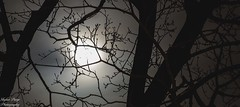 IMG_6696 (skylarpaigephoto) Tags: canon canon60d 300mm dark eerie night sky moon lunar silhouette glow midnight nature clouds fog skylarpaigephoto