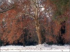 Secret Garden (Tölgyesi Kata) Tags: nemzetibotanikuskert vácrátótibotanikuskert botanikuskert botanicalgarden withcanonpowershota620 winter vácrátót tél smow hó