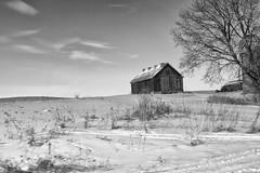 DSC06776-Edit (DAVIDHAUGE) Tags: farm blackandwhite snow sun sky barn field fence minnesota dave hauge three old winter woods white solitude