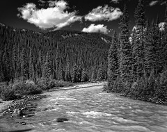 Untitled (RogelSM) Tags: bw river canadianrockies outdoor trees banff