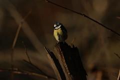 IMG_4772 (monika.carrie) Tags: monikacarrie wildlife scotland seatonpark