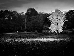 Autumn (drbonn) Tags: bearbeitungen bonn landschaften orte sw sonstige