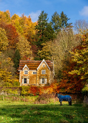 autumn (alastairgraham19) Tags: landscape england yorkshire sony sky nature tree horse autumn house outdoor