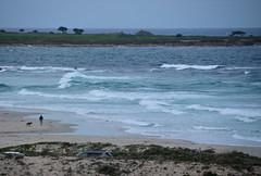 DSC_0755 (afagen) Tags: california pacificgrove asilomarstatebeach montereypeninsula asilomar beach pacificocean ocean