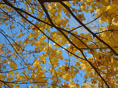 Autumn (cloversun19) Tags: rain animal field grass landscape branches leafs foliage sky russia russian spb tree walking country holiday holidays park garden dream dreams positive forest happy view grey legend fairytale fir firtree birch village evening romantic october september car road street blue maple leaves town city light sun yellow autumn trees leaf