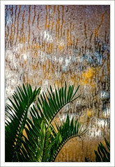 Condensation and Autumn Colour. (Mikec77) Tags: rhswisley condensation hothouse arty