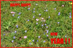 Le son bleu des cloches (RarOiseau) Tags: fleur montagne vert fête alpesdehauteprovence saintpaulsurubaye col pass nature summer été