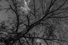 Diagonaal in z/w/Diagonally in b/w (truus1949) Tags: bomen licht zw