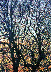 09Jan19 Tangled Branches2 Colour (Daisy Waring World) Tags: trees treesilhouette winterbranches sunset sunsetcolours peach grey blue