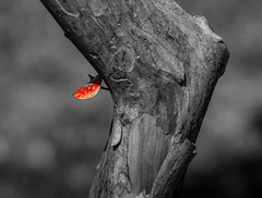Tronco, Santiago de Chile (Mario Rivera Cayupi) Tags: árbol tree park parque vegetación tronco hoja stem leaf blancoynegro bw canonlens canon80d seriel santiagodechile blackandwhite lentecanon canon70200mmf28lisusm bokeh desenfoque