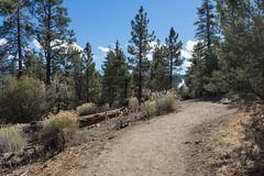 The Woodland Trail (San Bernardino Nat'l Forest) Tags: woodlandtrail naturetrail hikingtrail bigbear