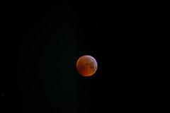 02_Super_Wolf_Blood_Moon_Eclipse_01_19 (Marcus.Ghil) Tags: lunarossa superluna superwolfbloodmoon wolfmoon moon mooneclipse bloodmoon