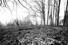 Herbstlaub (MikeSolfrank) Tags: none laub berg herbst bäume wald einfarbig mystisch muster bayern bavaria outside nature light art sky winter