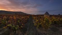 Agudillo on fire (Rafael Díez) Tags: españa larioja fuenmayor paisaje otoño atardecer sunset nubes filtro rafaeldíez viñas guardaviñas agudillo hojas color