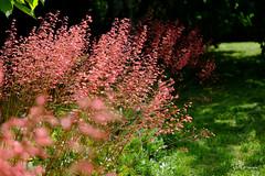 Couleurs d'été (jpto_55) Tags: fleur jardin été fuji fujifilm fujixf1855mmf284r commercy meuse lorraine france bokeh
