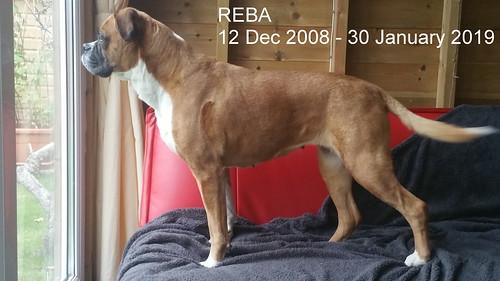 Reba, R.I.P.