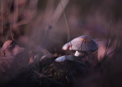 The World in-between (ursulamller900) Tags: helios442 bokeh mushroom pilze autumn herbst vintagelens manualfocus handheld