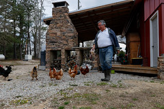 Buitrago prepares to feed his chickens on the farm.