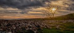 DSC_2634-HDR-Edit-Edit.jpg (Zuziq72) Tags: malhamtarn trees sheep penineway water cows malhamcove