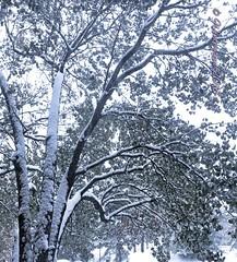 snow snow snow......2018-11-15