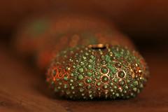 Sea urchin (eleni m) Tags: macromondays hmm dotsandstripes macro seaurchins dof bokeh canon6d candlelight