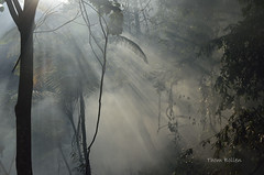 _DSC0714 flickr (T and F Bollen) Tags: leuser gunung nationalpark gunungleuser jungle indonesia sumatra light smoke beauty