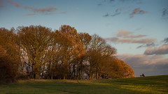 A moments contemplation at the end of the day (davepickettphotographer) Tags: parliamenthillfields london uk heath hampstead north northlondon autumn leaves fall england late afternoon autumnal trres landscape seated figure nw5 light sunlight