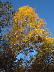 2018_10_0277 (petermit2) Tags: autumn pottericcarr potteric doncaster southyorkshire yorkshire yorkshirewildlifetrust wildlifetrust ywt