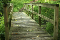 The bridge to the goldenrod field