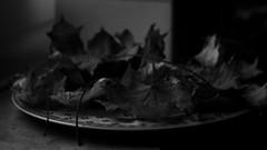 autumn leaves (pancolar user) Tags: blackwhite noiretblanc монохромный blancoynegro zwartwit czarnobiałe biancoenero maple mapleleaves 169 autumn autunno autumnleaves осень automne ruduo podzim jesień höst érable esdoorn кленовый ahorn klevas σφεντάμι arce akçaağaç pentacon1850mm pentacon50f18 pentacon50mm pentacon50 prakticar50mm prakticar50 iso800