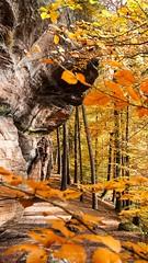 #Waldbaden #Felsenwanderweg #Rodalben #Saufelsen (august.eberle) Tags: saufelsen herbst sandstein natur rodalben felsenwanderweg pfalz blätter felsen