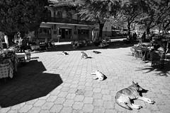 Waiting for a next tour (JarHTC) Tags: fujifilm xe2 samyang 12mm sighnaghi georgia dogs market souvenirs bw monochrome