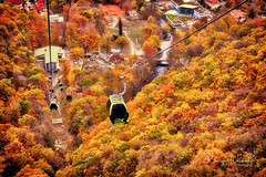 Kabinenbahn Thale (r.wacknitz) Tags: thale kabinenbahn hexentanzplatz herbst luminar18 autumn sachsenanhalt nikond3400 nikkor natur bäume