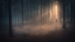 Quest (Radisa Zivkovic) Tags: woods man forest fog mist existence quest search lost lonly spooky mystery loneliness mystical spiritual scary lone solitude person people misty sunbeam ray sunlight morning tree pine mushroom male standing alone freedom danger wilderness nature outdoor scenic yellow moody environment autumn expolre adventure shadow