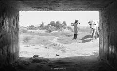 Waiting for Cattle (Irene Becker) Tags: africa arewa fulanicattle imagesofnigeria kadunastate nigeria nigerianimages nigerianphotos northnigeria westafrica fulani northernnigeria