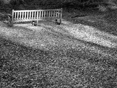 DSC05373b (Naturecamhd) Tags: dschx90v hx90v newyorkbotanicalgarden nybg botanicalgarden nature bronx green eco sonyhx90v thebronx sonydschx90v fall autumnleaves twinlakes bench blackandwhite
