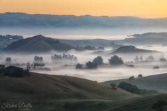 Layers (wandering indian) Tags: fog nature landscape sigma nikon telephoto benro kedardatta california petaluma winterfog sunrise cloudsstormssunsetssunrises travel