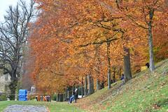 Autumn Trees Bank (Bri_J) Tags: chatsworthhousegardens bakewell derbyshire uk chatsworthhouse gardens chatsworth statelyhome nikon d7500 autumn fall trees